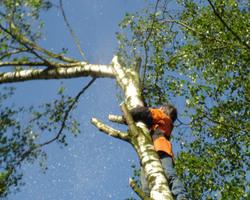 Cent arbres sans toit ASBL - Nos réalisations